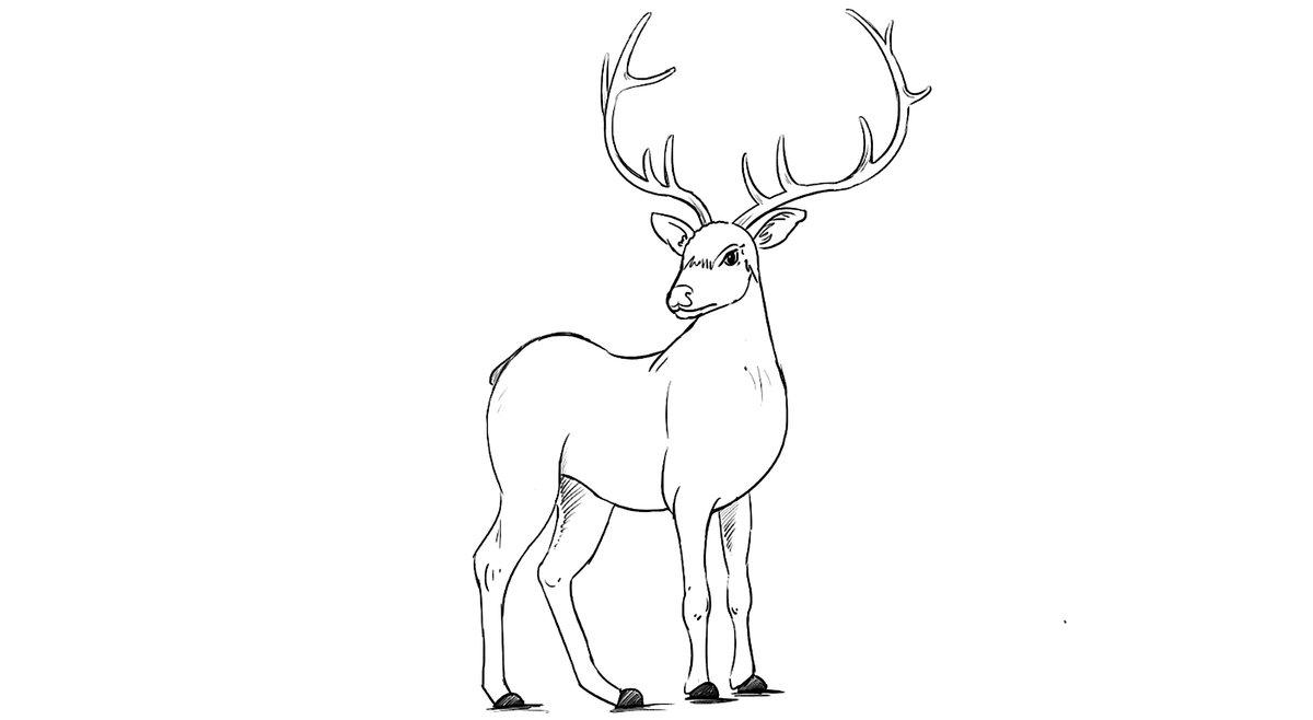 хотелось там северный олень как нарисовать картинки они могут спасти