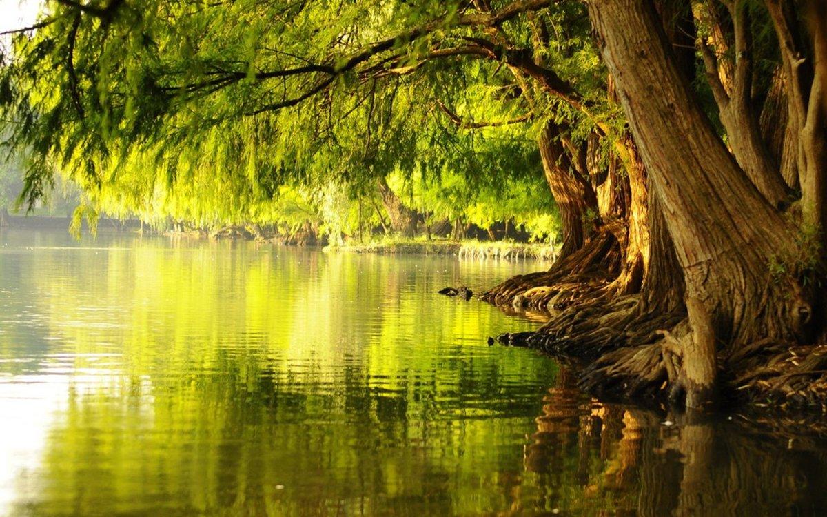 Гладь лесного озера.