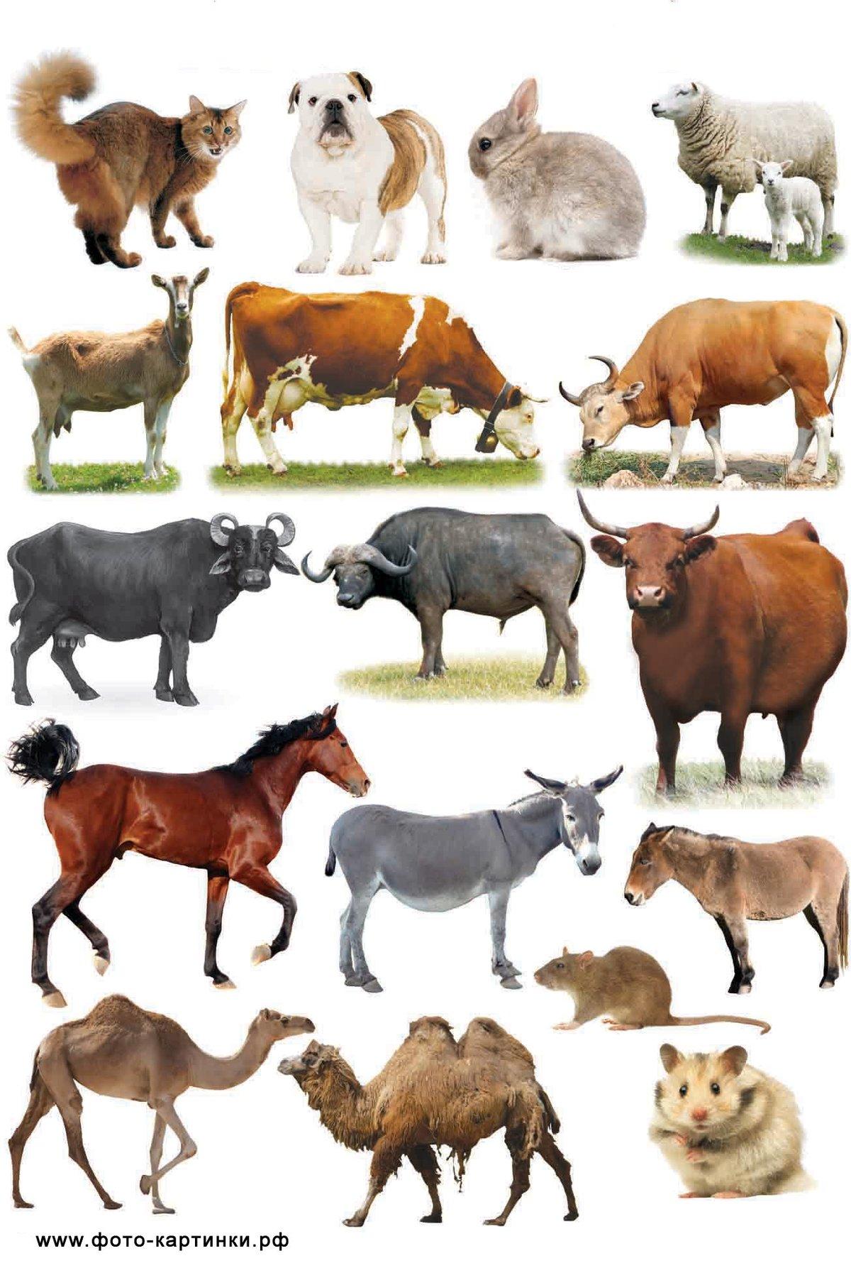 виды разбавлю изучаем животных фото коллекция прикольных креативных