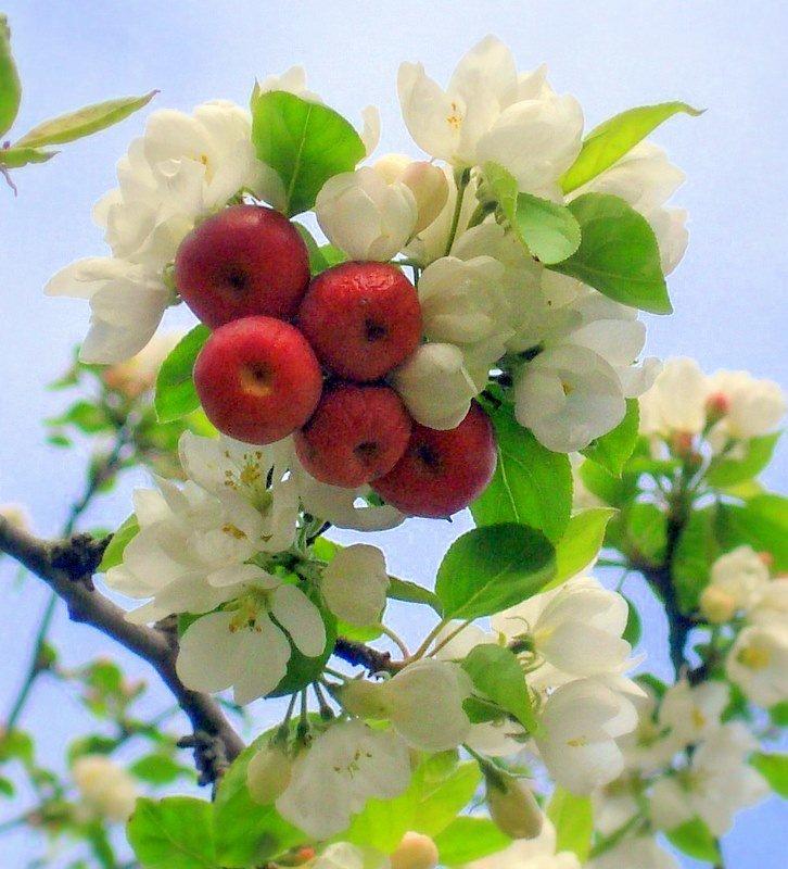"""Как в сказке """"12 месяцев"""" #весна #деревья #май #парк"""