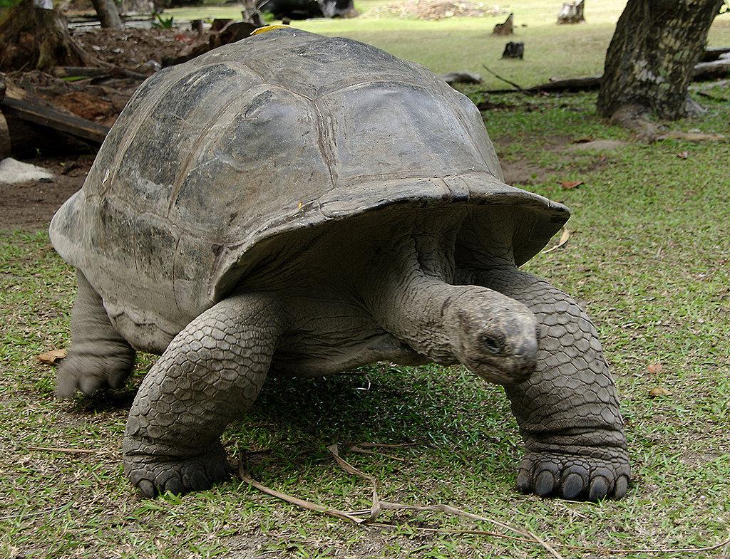 Картинки слоновой черепахи, крутые открытки
