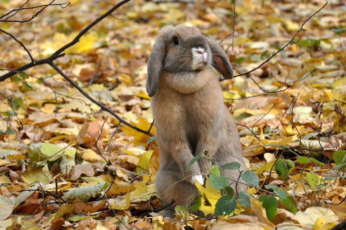 Заяц осень картинки