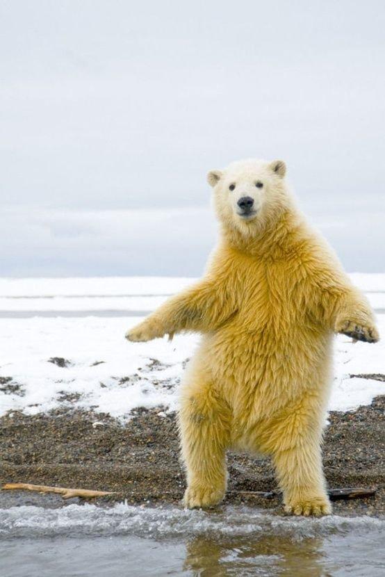 Картинки медведей белых смешные, которые есть
