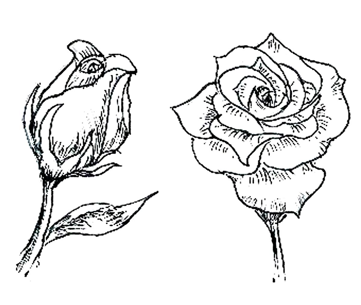 таком распускающийся цветок картинки карандашом белого цвета