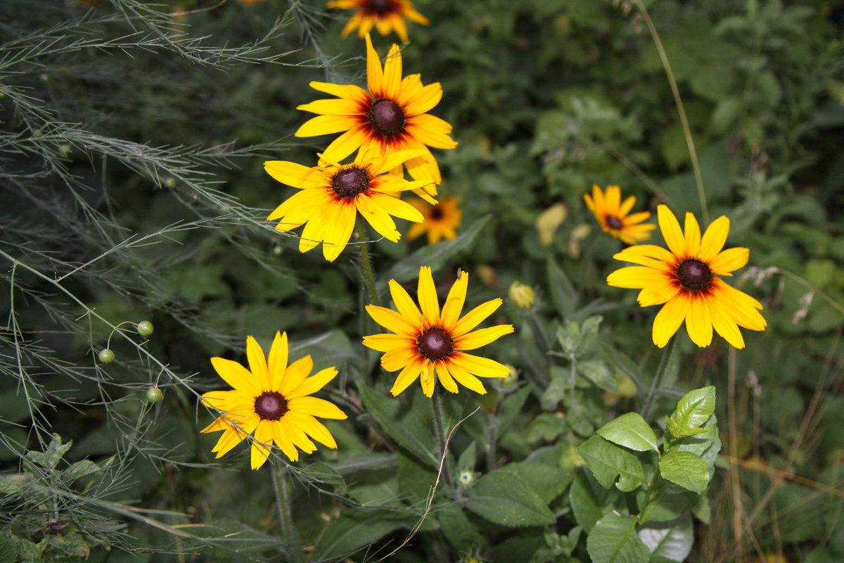 желтый цветок на даче фото нашу