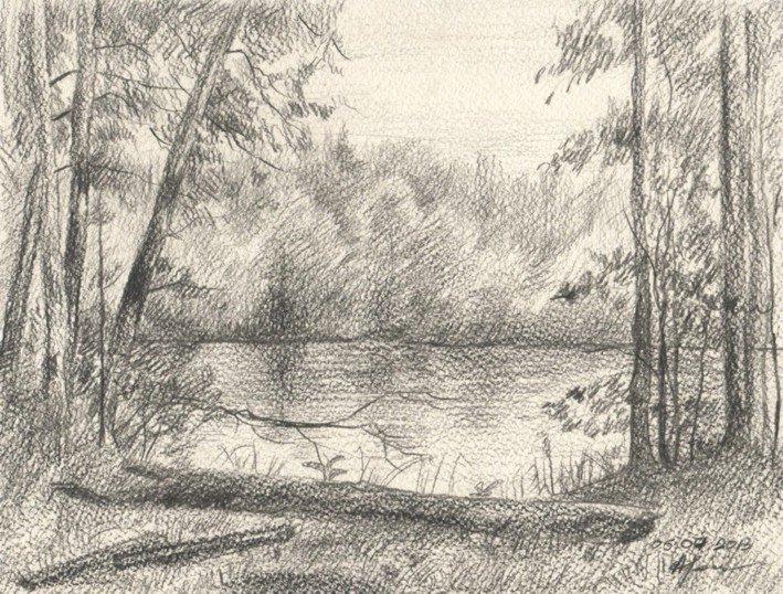 основной фото деревьев у пруда карандашом нежные