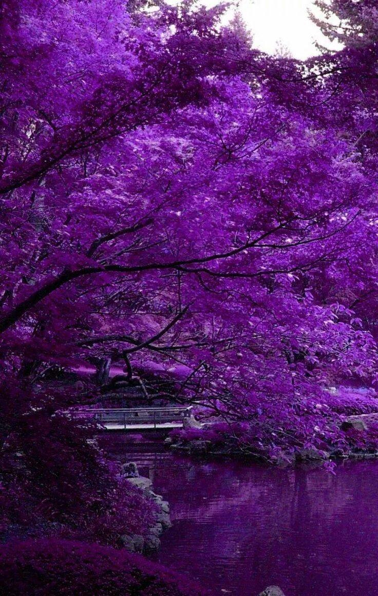 картинки фиолетового цвета фото жаркое универсальное, его