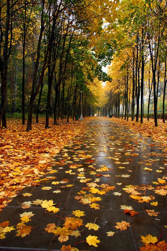 Осень гиф картинки