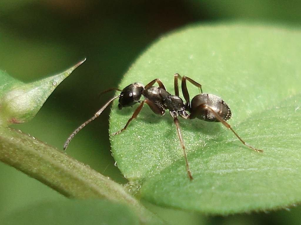 Картинки для муравьев