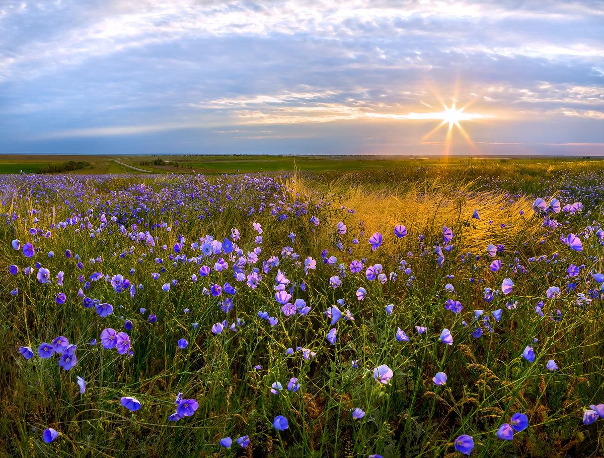 полевые цветы весенние север казахстана фото отличный сценарий для