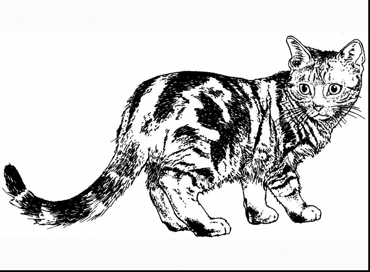Кот картинки черно белые
