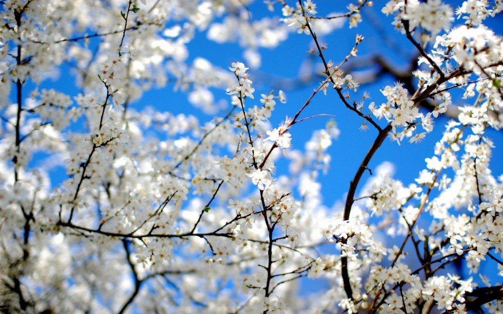 Маме днем, картинки с апрелем красивые