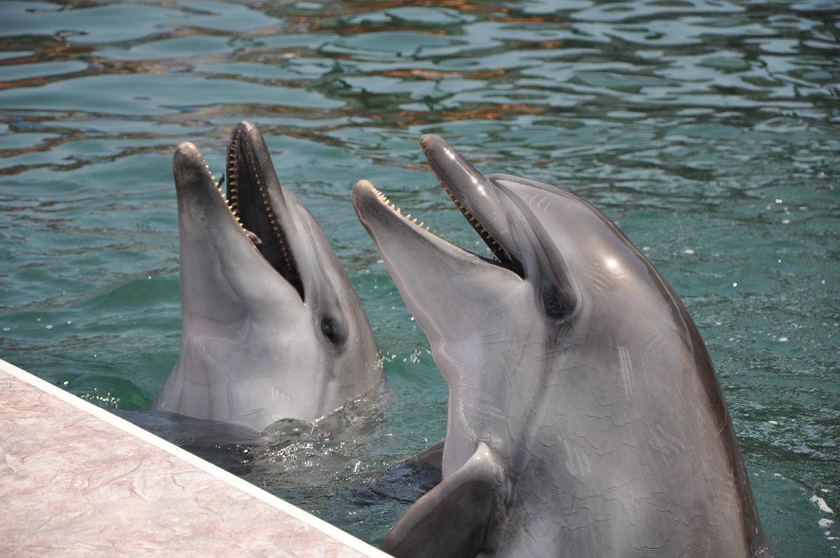 Картинки дельфин афалина