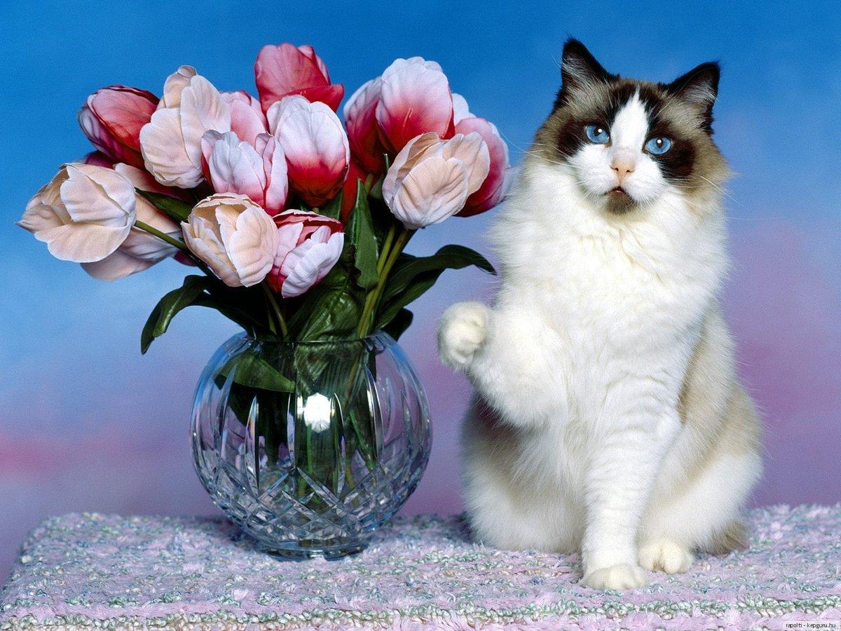 Для пары, открытки кошки с цветами