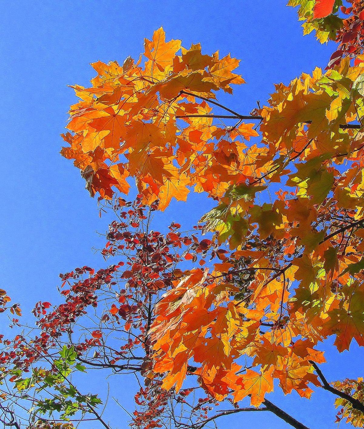 открытка сентябрь осень цветки медленно