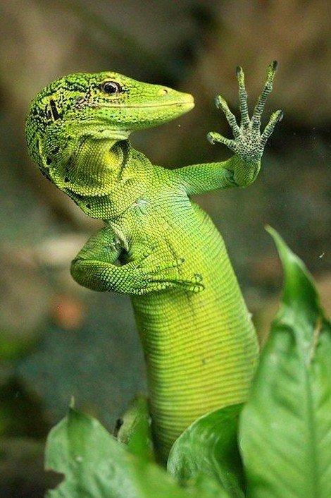 Прикольные картинки рептилий, днем