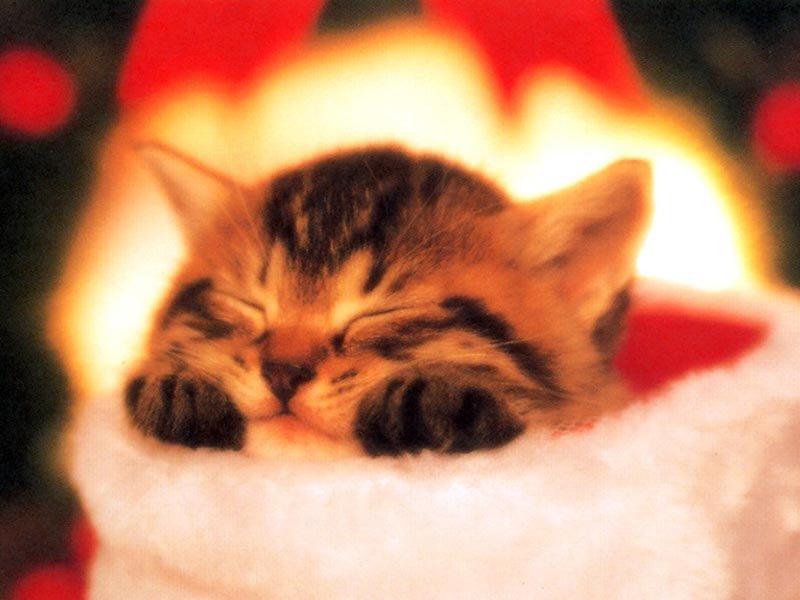 Картинки спокойной ночи мой сладкий котик