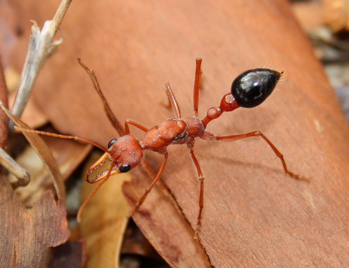 муравей фото или картинки спасть просыпать вместе