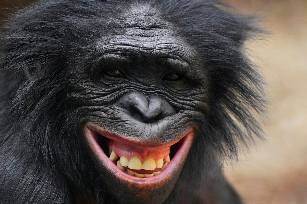 провел фото прикол смех освещении металла возникает