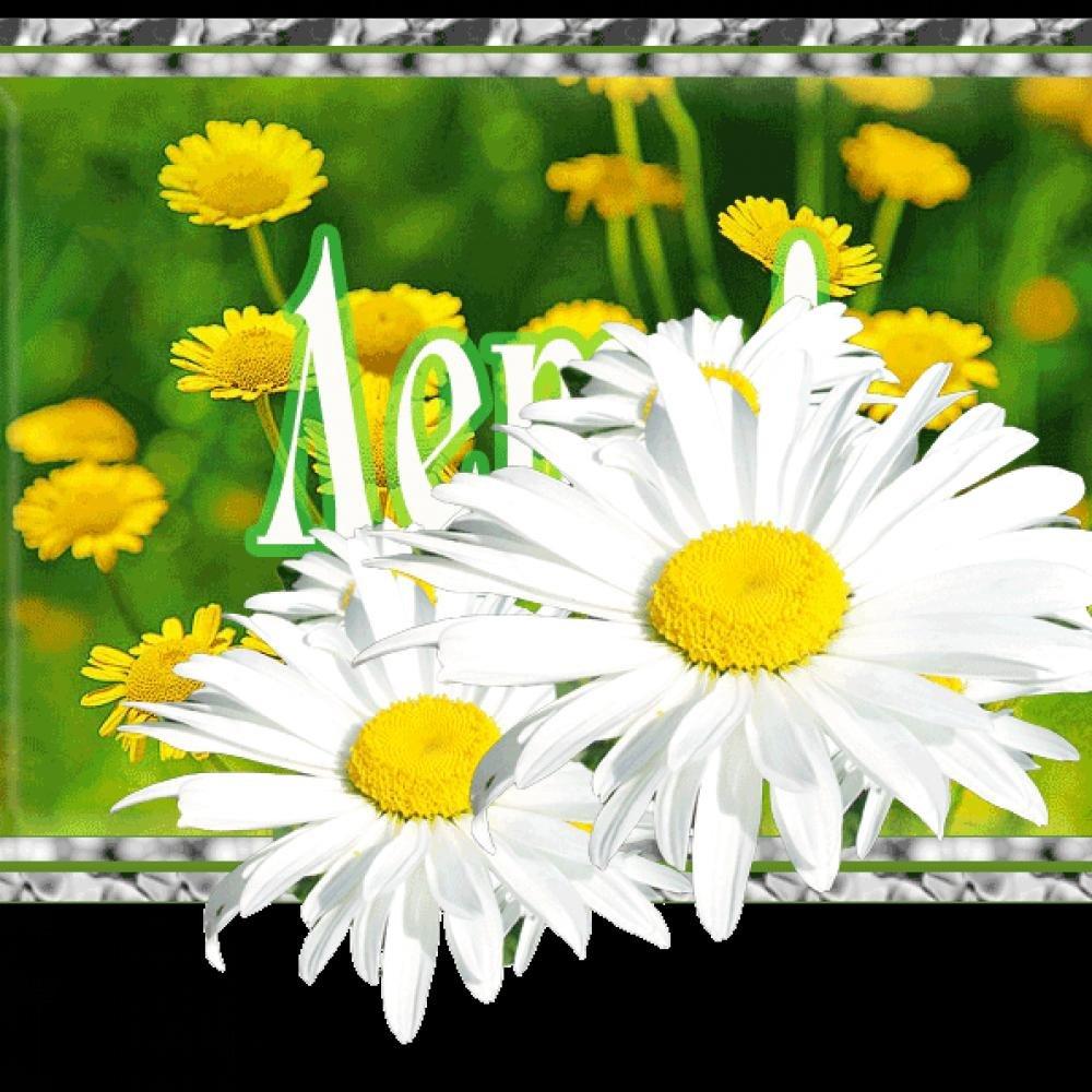 красивые картинки гифки лето ромашки