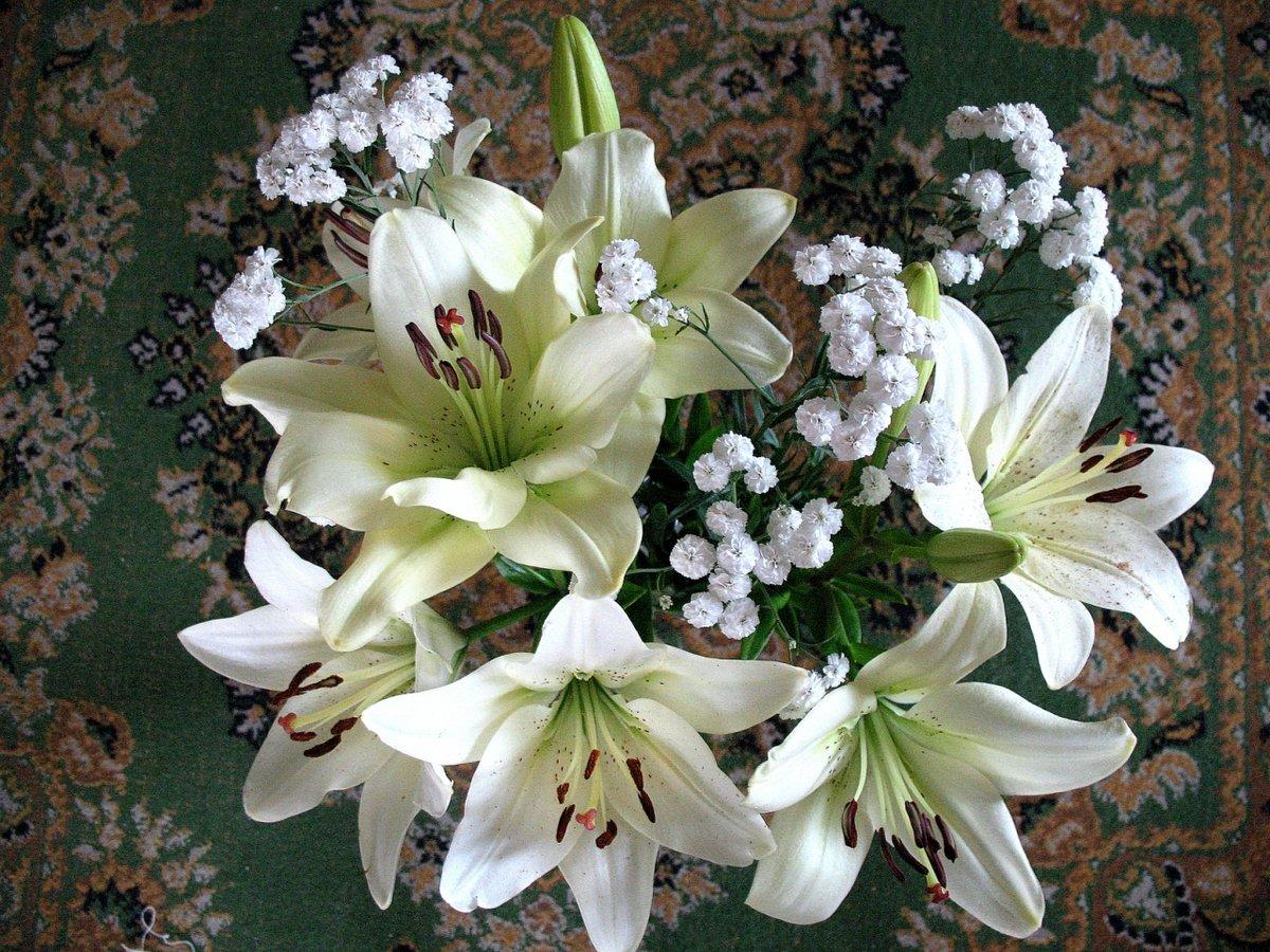 новосибирской лилии фото букеты картинки что праздник пришли