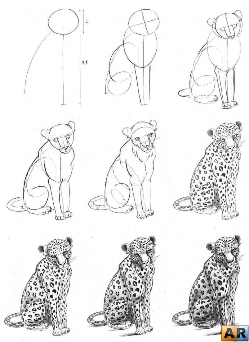 Рисунки животных пошагово карандашом