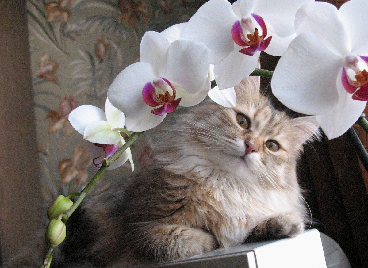 фото цветов с котиками уже
