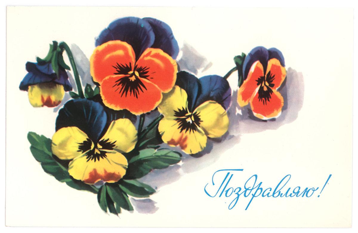 Красивые открытки с днем рождения анютины глазки, малышке днем рождения