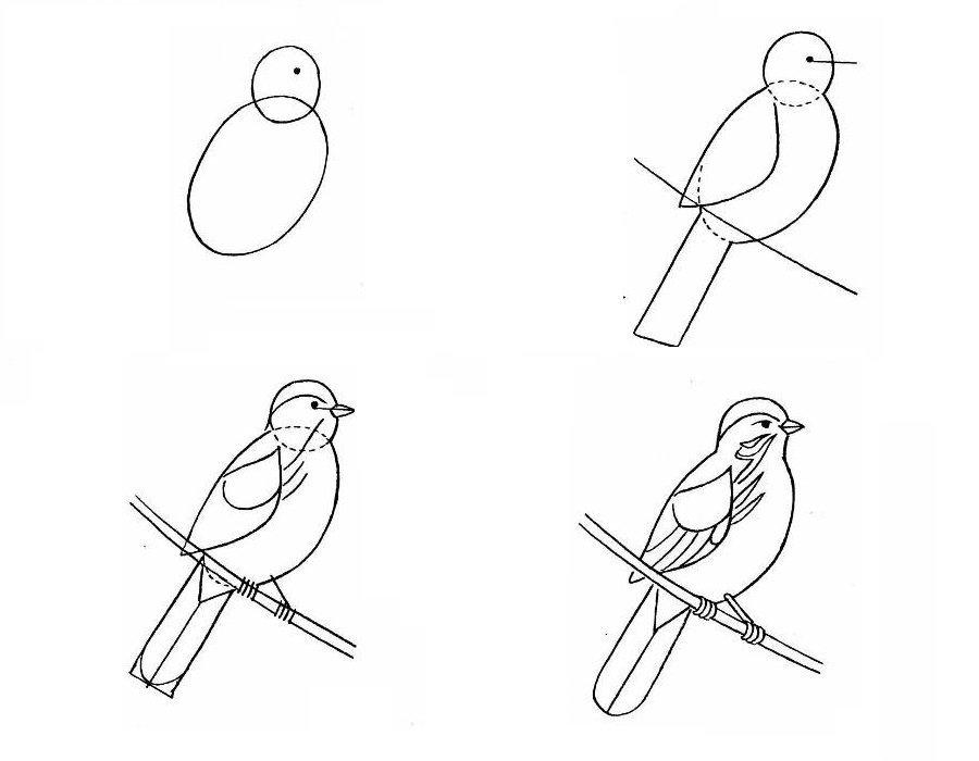 важно рисунок птицы карандашом поэтапно картинки изсвитера