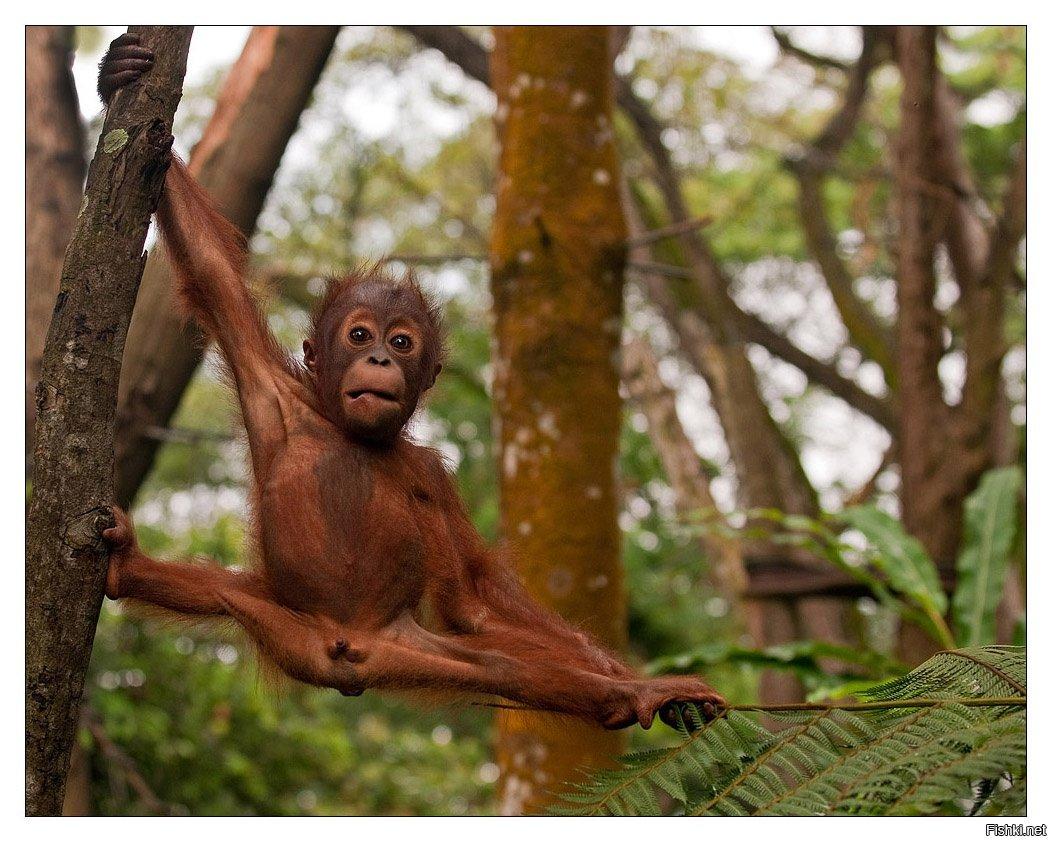 Самые смешные обезьяны картинки, новым