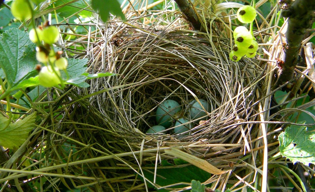 птицы фото гнездятся в траве время