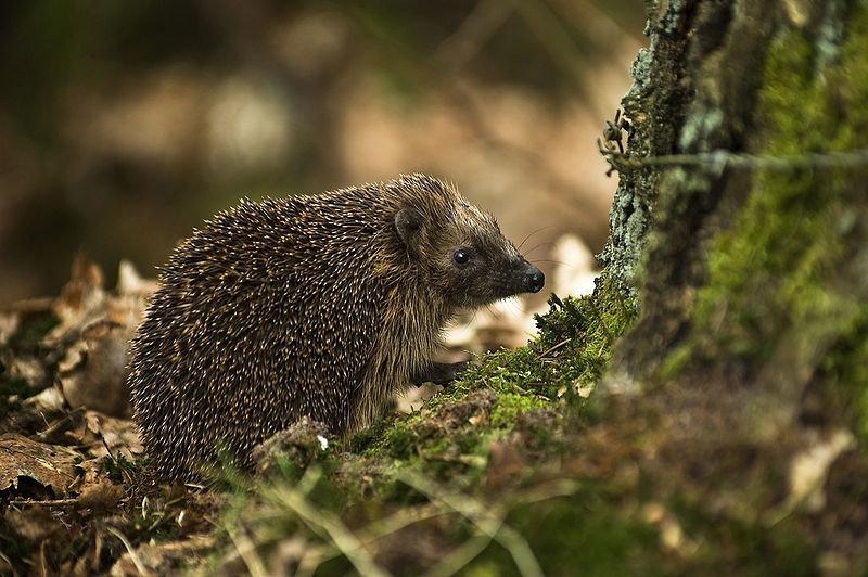 лесные животные фото и названия германия