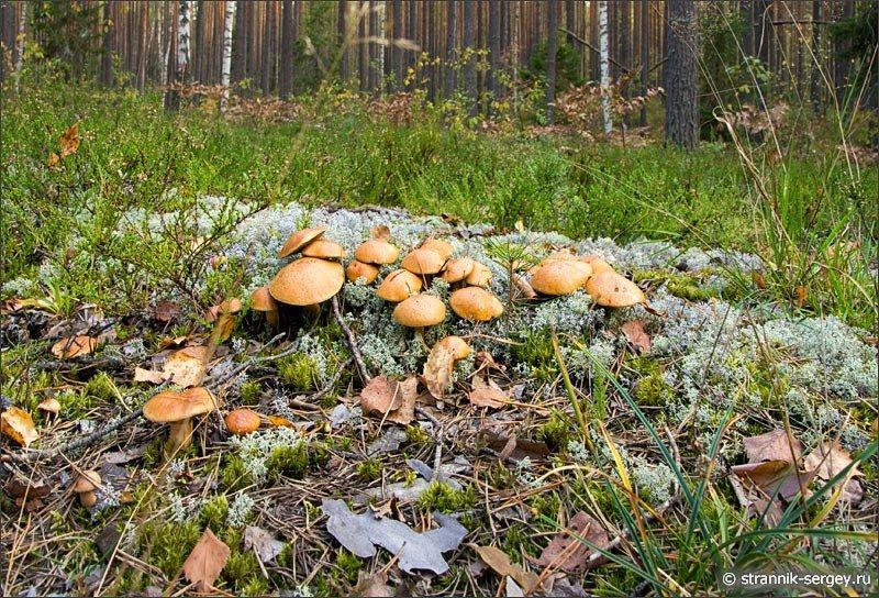 гамма получается грибные места в коми фото конусные газовую