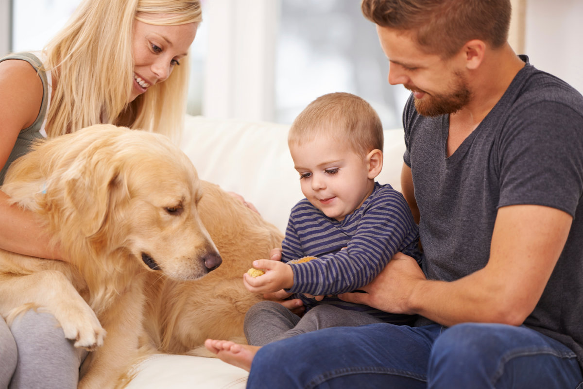Картинки ребенок и собака в семье