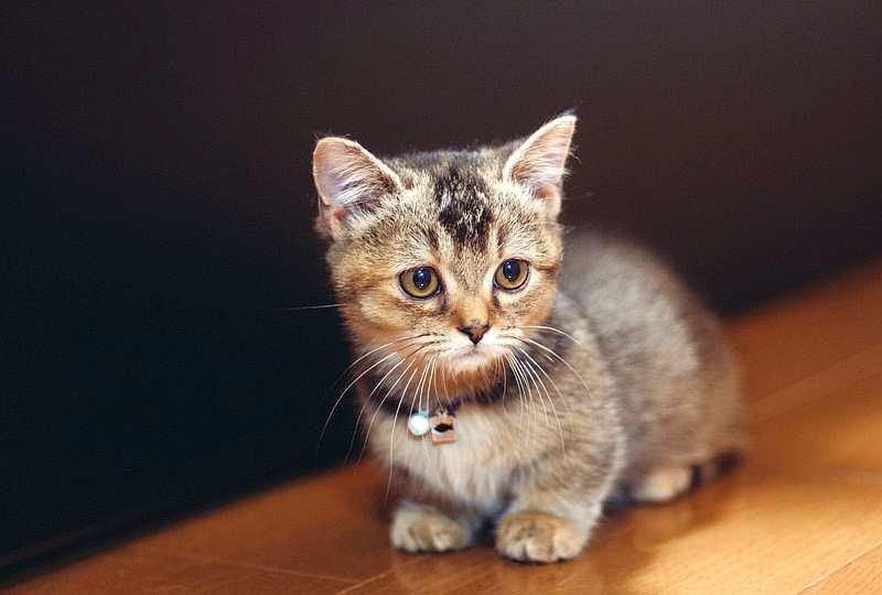 мини фотки котят взрослее, все же