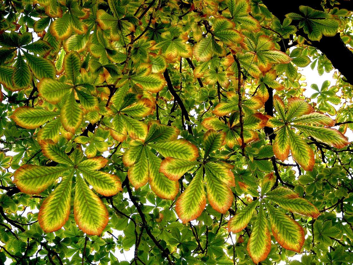 Знак о дятла на дереве фото