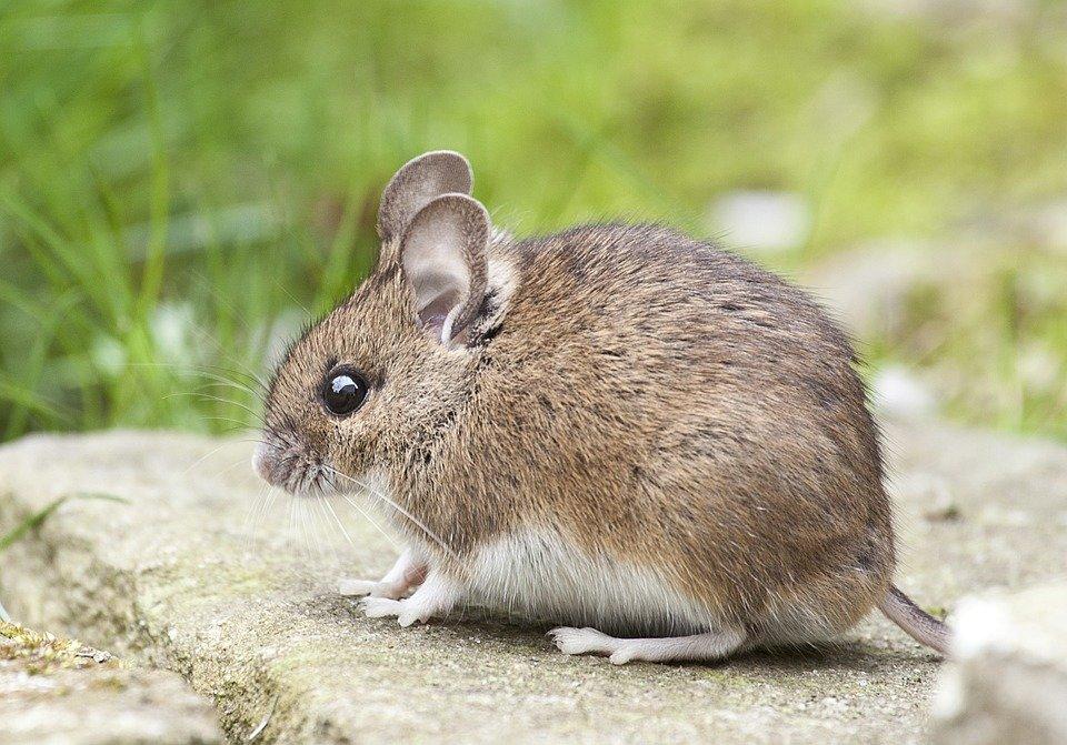 Мышка красивые картинки, лет женщине