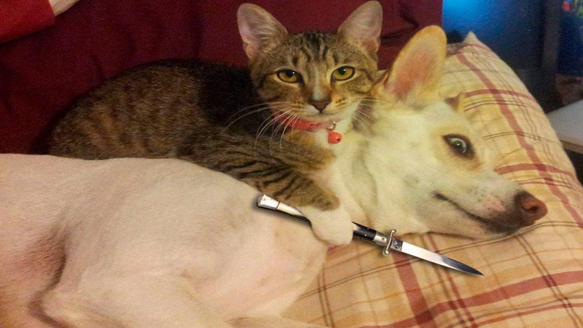 Смешные картинки про собак и про котов