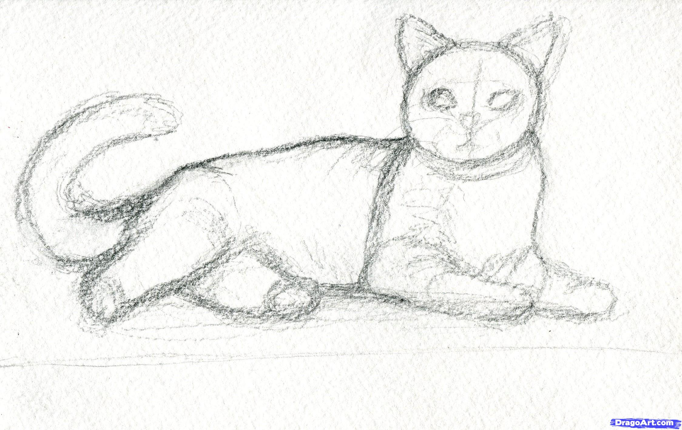 draw realistic cat realistic cat drawing how to draw realist card
