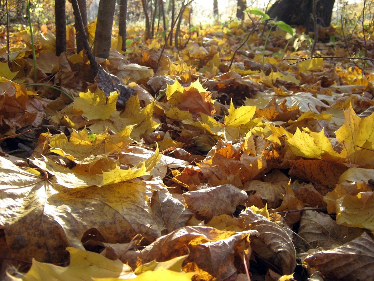 одну премьер гулял сентябрь кружил листвой картинки круглого