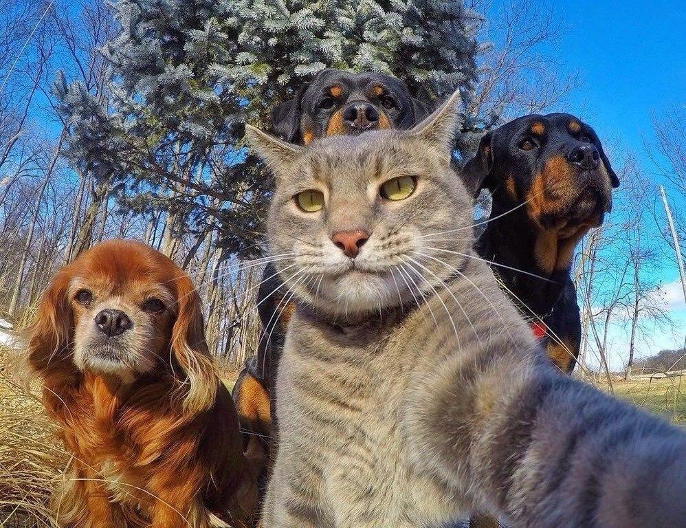 Прикольные, смешные котики с собаками