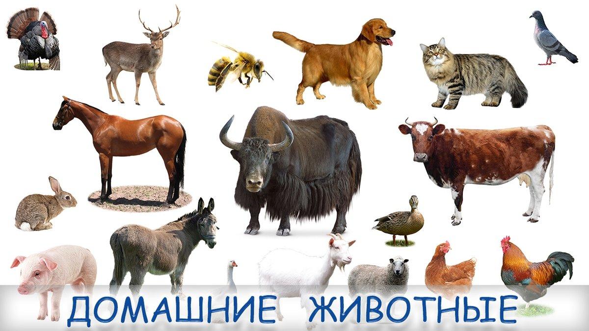 Картинки всех диких и домашних тех