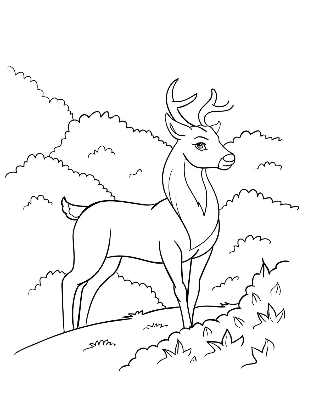 как нарисовать оленя на природе