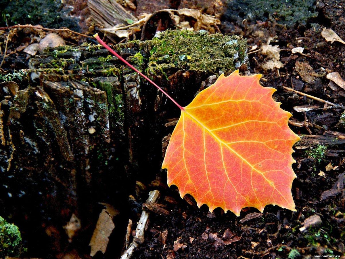 усики, красивые картинки разных листьев мне понравился
