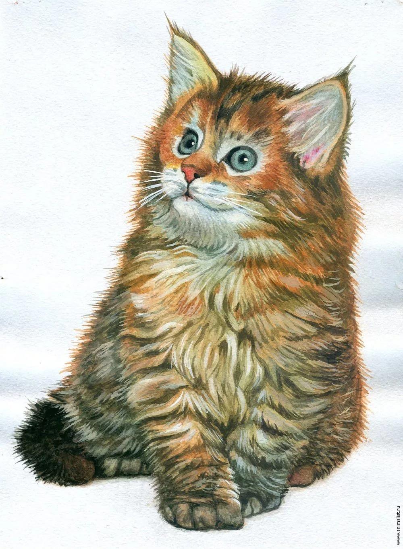 Рисунки животных для детей кошка