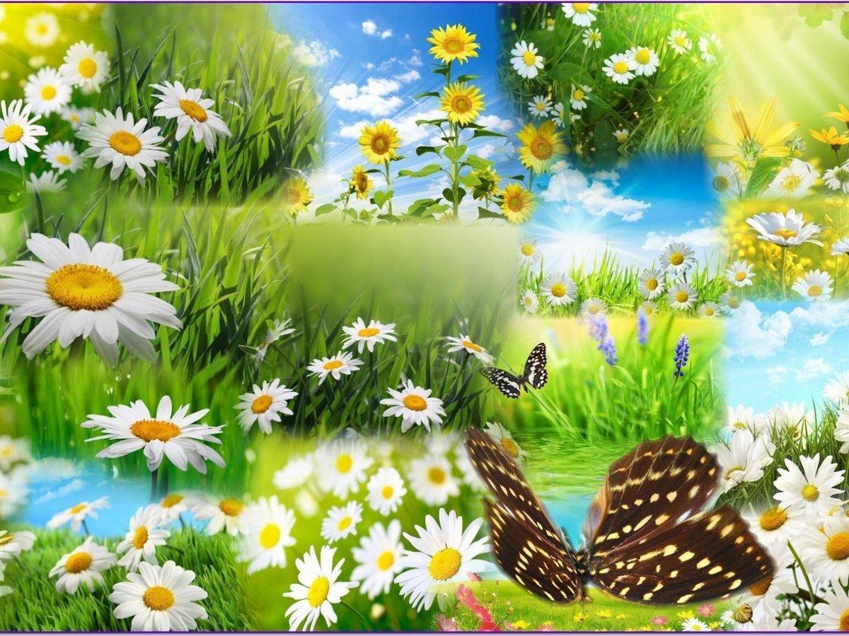 Открытки на летнюю тему, картинки туфель открытки