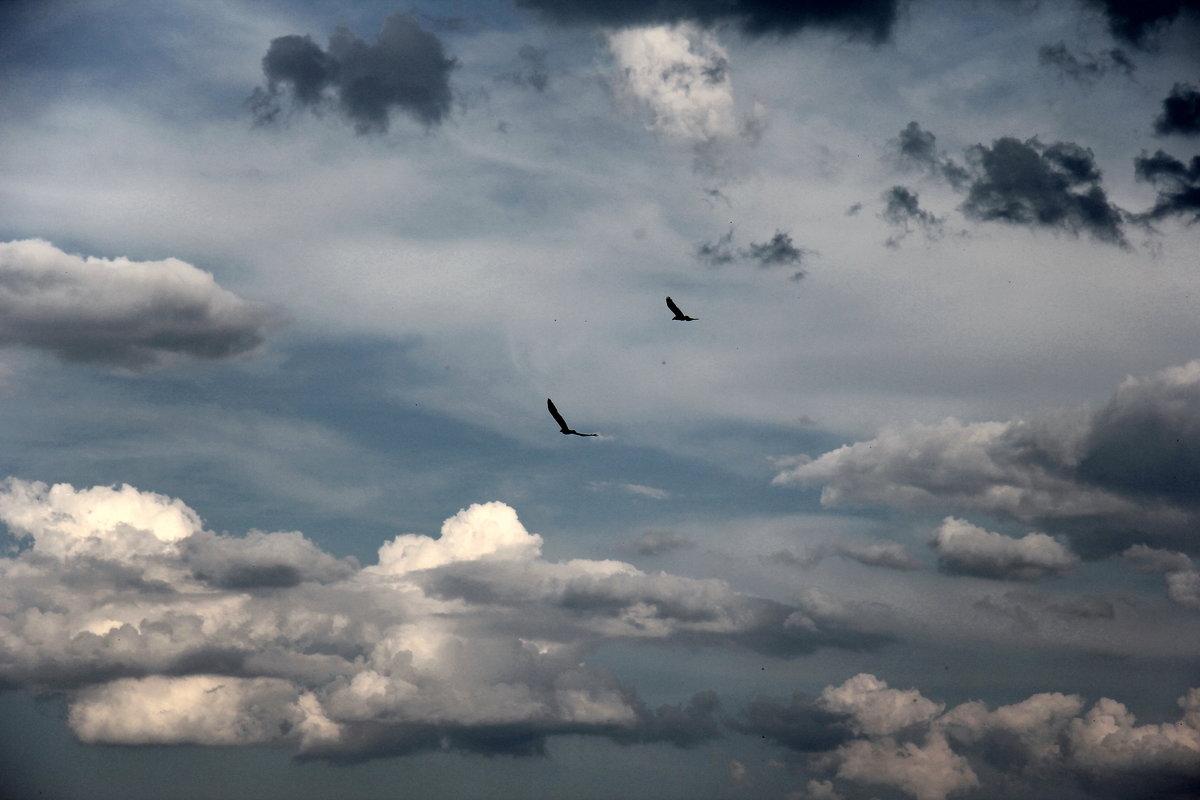 некоторой удалённости фото небо птицы облака какое отношение
