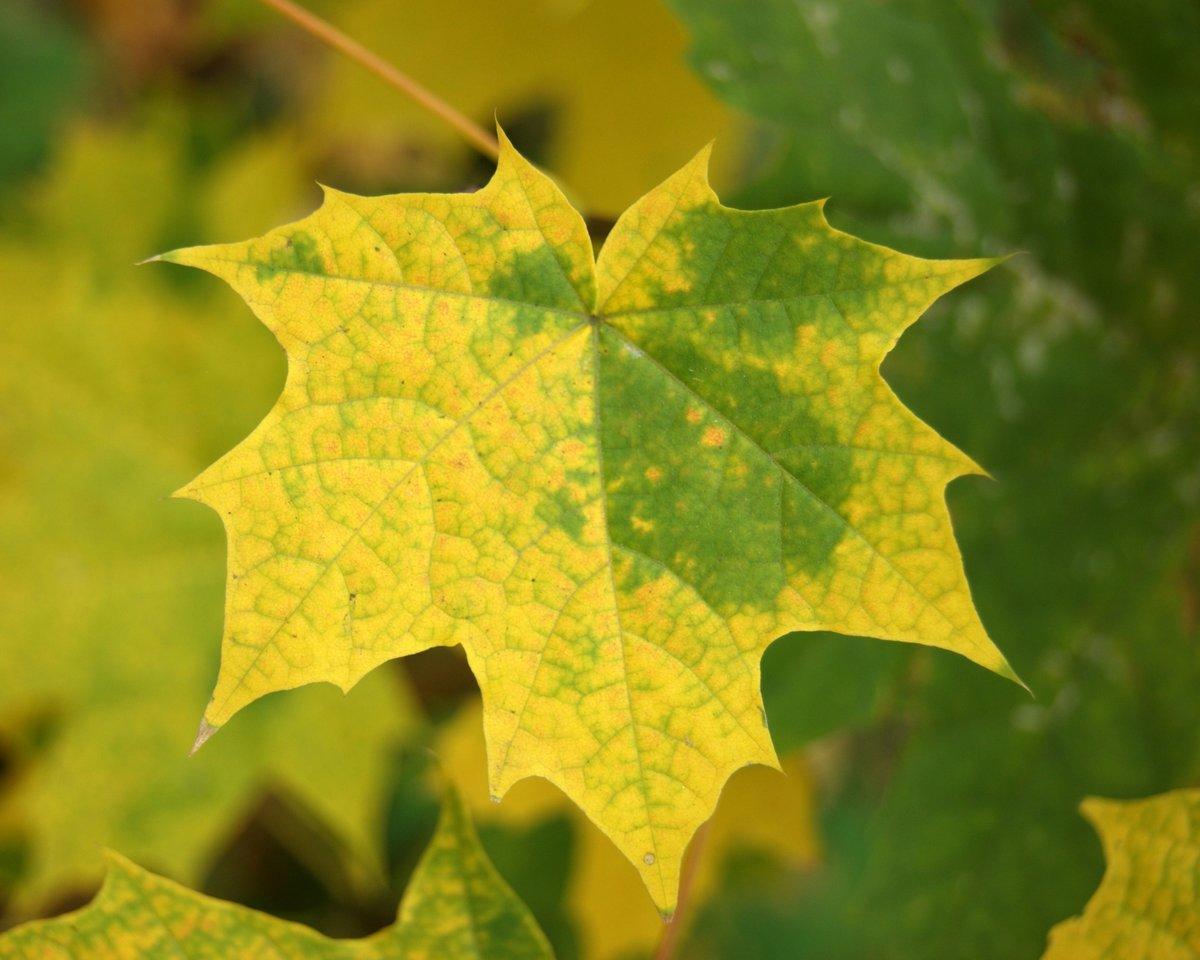 Картинки желтых листьев