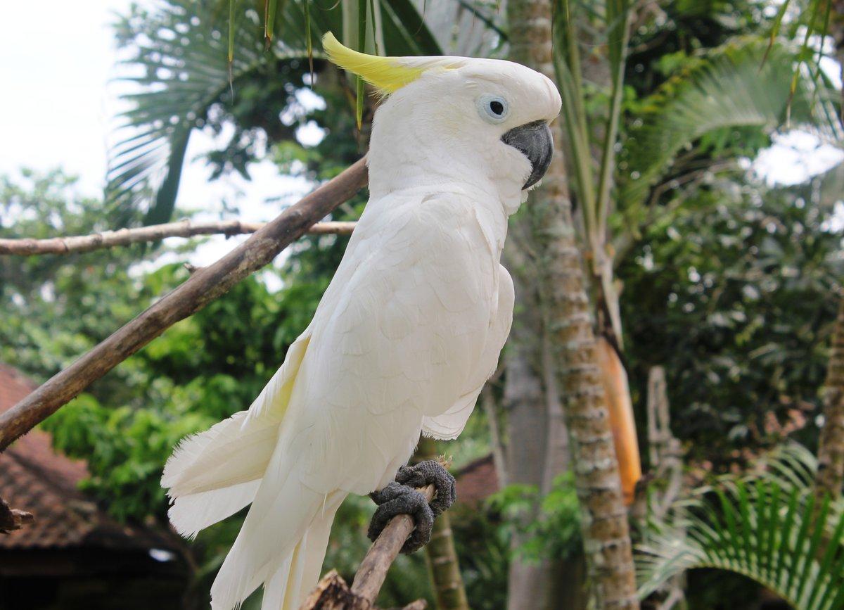 Фото белых попугаев