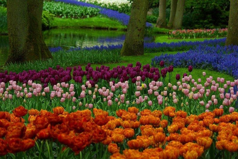 Купить самые красивые цветы в мире фото, букет розовый
